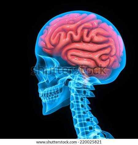 Brain - stock photo