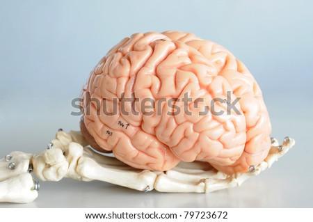 brain and hand - stock photo