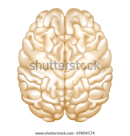 Brain, Bitmap copy - stock photo