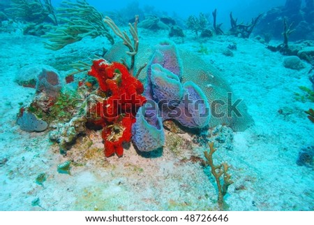 brain coral and colorful sponges