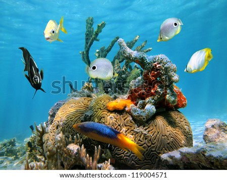 Brain coral with colorful sea sponges and tropical fish in the Caribbean sea - stock photo