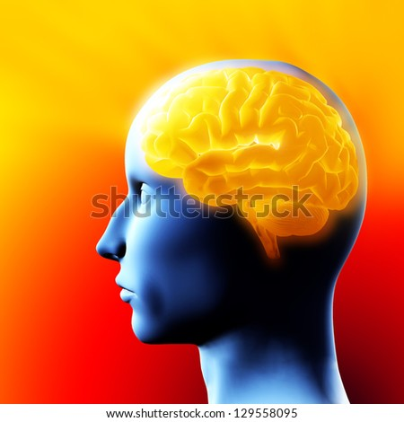 Brain - 3D illustration. - stock photo
