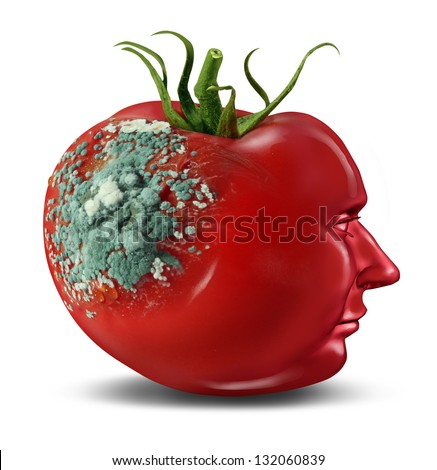 Brain decay and dementia and aging as memory loss concept for human cancer disease or an Alzheimer's illness with the medical icon of a tomato with mold rotting on a shape of a human head on white. - stock photo