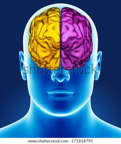Brain detail - stock photo