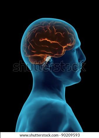 Brain Faded cover - stock photo