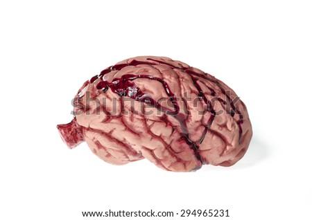 Brain isolated against white - stock photo