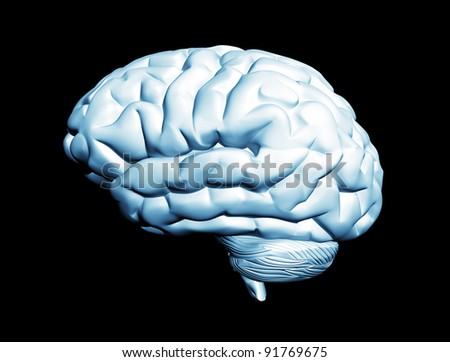 Brain isolated on black - stock photo