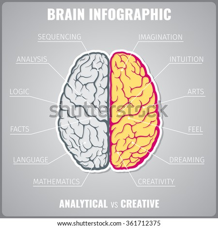 Brain left analytical and right creative infographic concept - stock photo