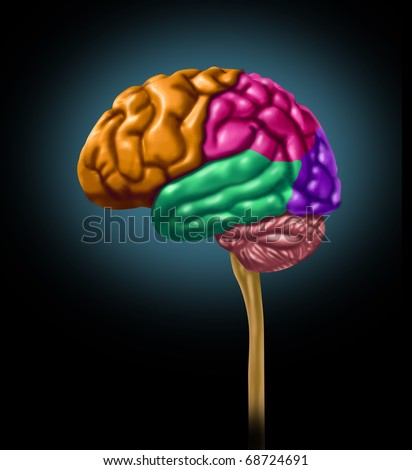 brain lobe sections divisions of mental neurological lobes multi color activity isolated - stock photo