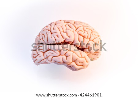 Brain made plastic side view, isolated on white background