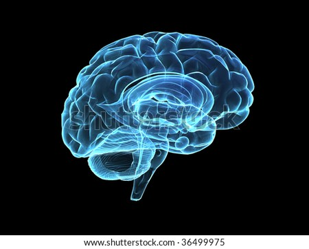 Brain model xray look isolated on black background - stock photo