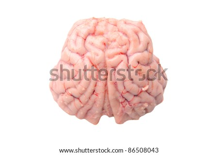 Brain of a black-tailed deer isolated on white - stock photo