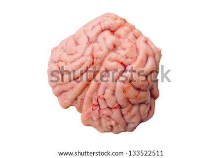 Brain of a black-tailed deer isolated on white for Obama's new brain research - stock photo