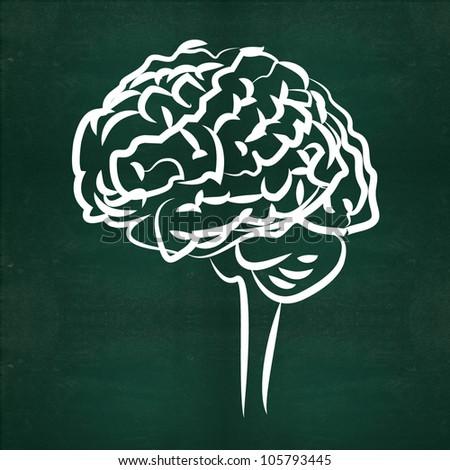 Brain on blackboard background - stock photo