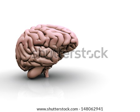Brain on White Surface - stock photo