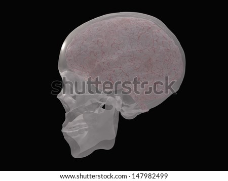 Brain revealed in transparent skull - stock photo