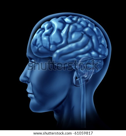 brain side view medical mental health - stock photo
