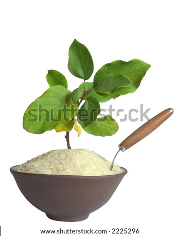 Branch and spoon in a bowl of rice