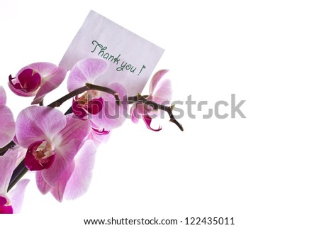 branch beautiful orchids on a white background - stock photo