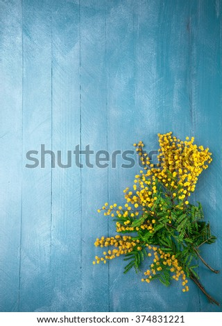 Branch blooming mimosas on blue wooden board top view with copyspace - stock photo