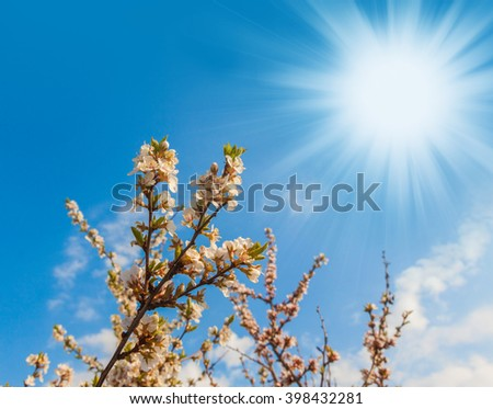 Branch blossom apple tree on the sky background