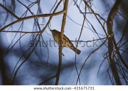 branch blue sparrow. Sparrow sits among the branches of the tree - stock photo