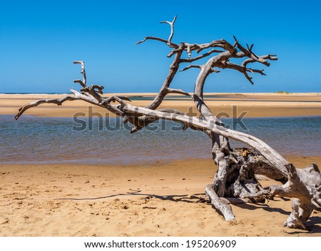 branch by the sea