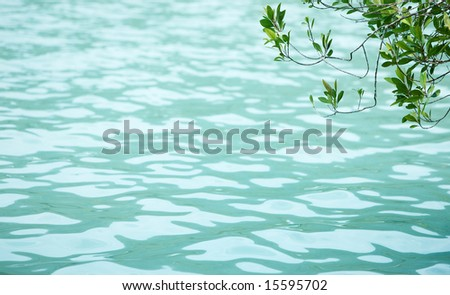 branch by the sea, water texture background