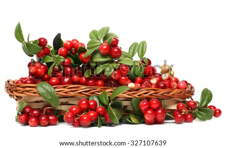 Branch Cranberries Isolated On  a White Background. - stock photo