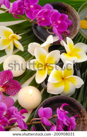 Branch frangipani with orchid with bowl with candle on green leaf - stock photo