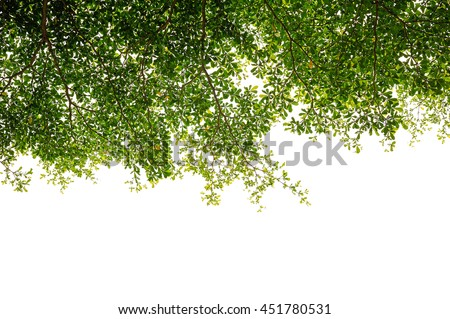Branch green leaf on white background - stock photo