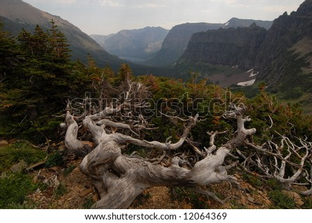 Branch in foreground - stock photo