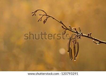 Branch in the early morning sun - stock photo
