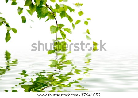 Branch of a birch and its reflexion in water - stock photo