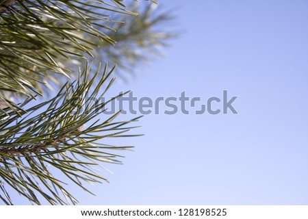 Branch of a coniferous tree with spring sky - stock photo