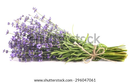 Branch of a lavender isolated on a white background - stock photo