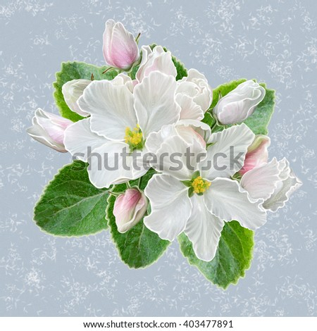 branch of apple blossoms. Spring flowering. White flowers.