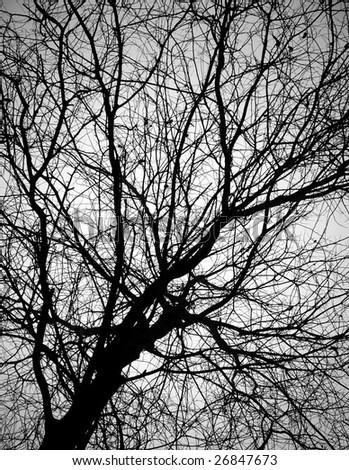 branch of bald tree - stock photo