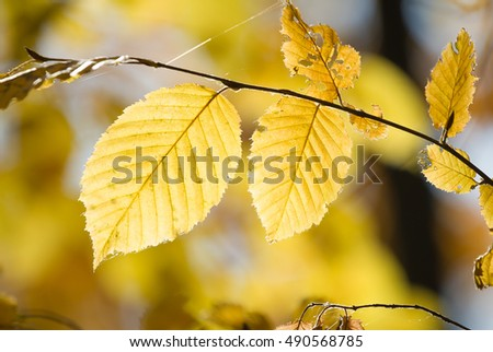 Branch of beautiful autumn leaves on sunlight