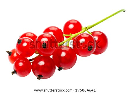 Branch of berries, red currants, isolated on a white background - stock photo