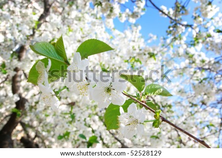 Branch of big white tree. Nature composition. - stock photo