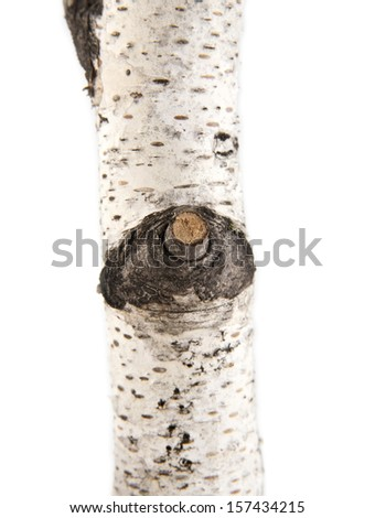 branch of birch on a white background - stock photo
