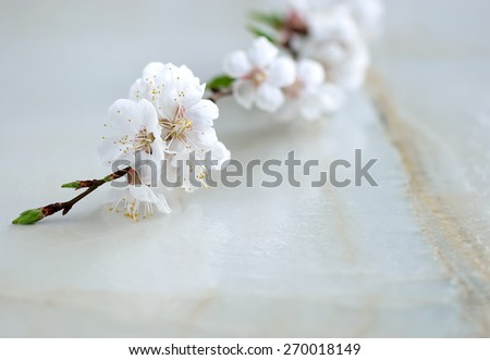 Branch of cherry blossom on wet surface, symbol of spring freshness beauty and purity, spa background; selective focus - stock photo