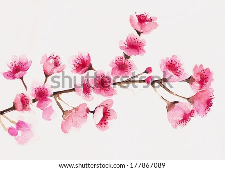 Branch of Cherry blossom tree. - stock photo