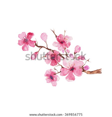 Branch of Cherry blossom , watercolor painting