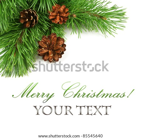 Branch of Christmas tree and pine cones on white background - stock photo