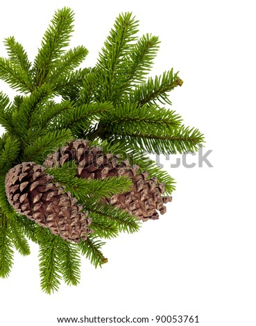 branch of Christmas tree with cones isolated on white - stock photo