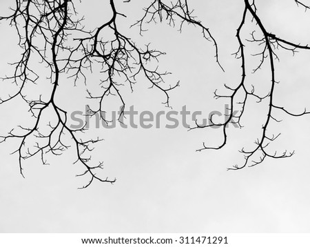 Branch of dead tree - stock photo