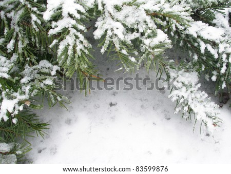 Branch of fir tree in snow, background for text - stock photo
