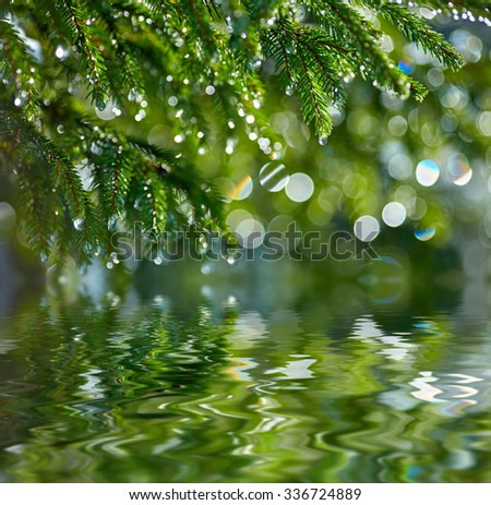 Branch of fir tree reflected in the water. Shallow DOF - stock photo